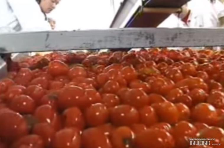 конвейер для томатов